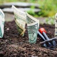 Reverse Mortgage Line of Credit Growth